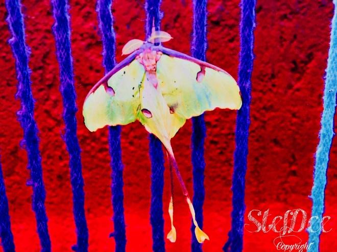 Métamorphose; papillon; vie; changement; renouveau.